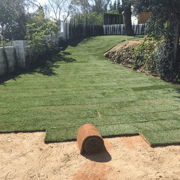 Como poner tepes de cesped great tepes en zonas pblicas for Como plantar cesped natural