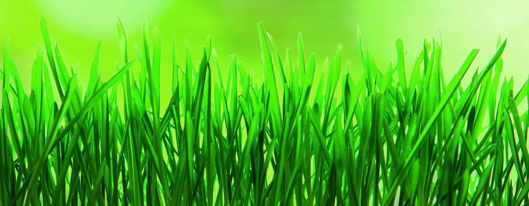 Cesped natural turf green tepes de cesped natural - Cesped natural ...